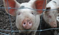 Pig Identity Generator (PIG)