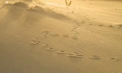 (P) Sandbox