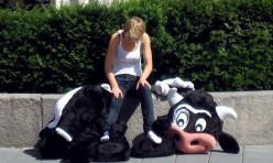 The Cow's Curse